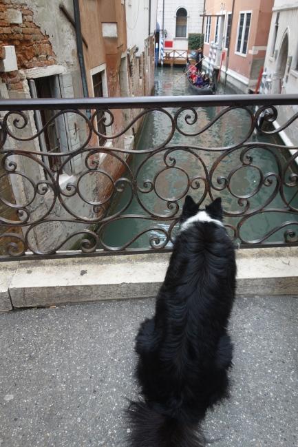 Dog gondola
