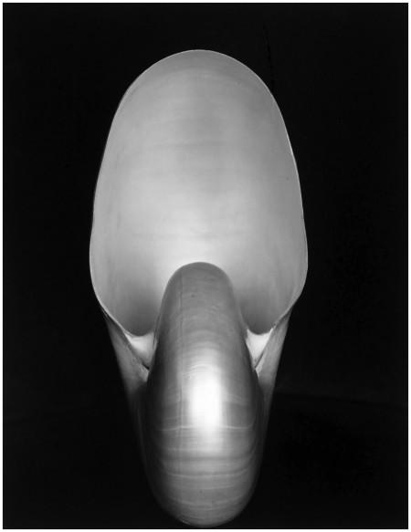 weston - shell